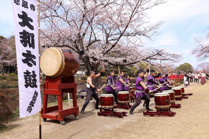 *CANCELLED* Iwatsuki Castle Park Cherry Blossom Festival