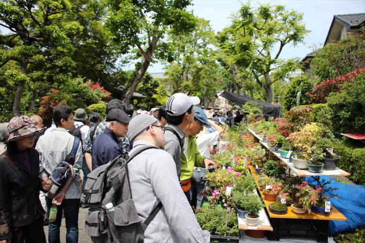 *Postponed* Omiya Bonsai Festival