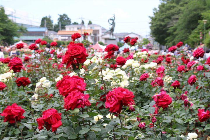 *CANCELLED* Rose Festival