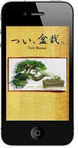 p_bonsai_img3