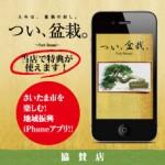 twitbonsai_80