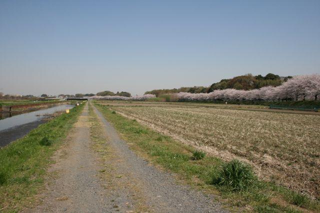 見沼田んぼ:春