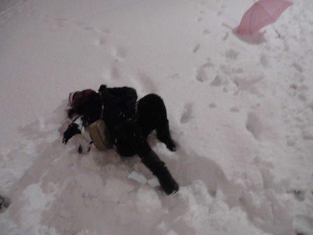 さいたま市の背中(70)『さいたま市、大雪!』
