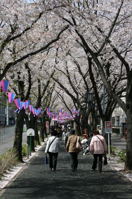 『花と緑の散歩道』4月はイベント盛りだくさん!