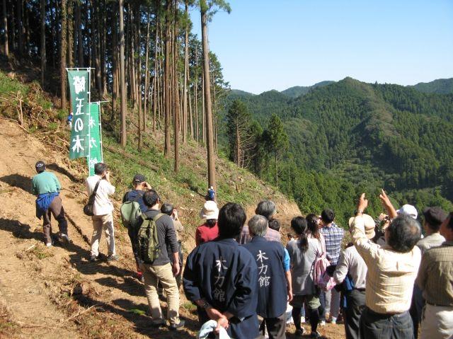 木力館が伐採見学ツアーの参加者を募集しています!