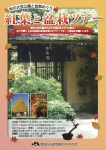 141125_koyotobonsai
