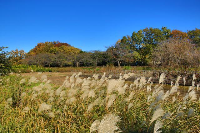 秋の見沼たんぼ周辺に出かけてみませんか?様々なガイドツアーが用意されています。