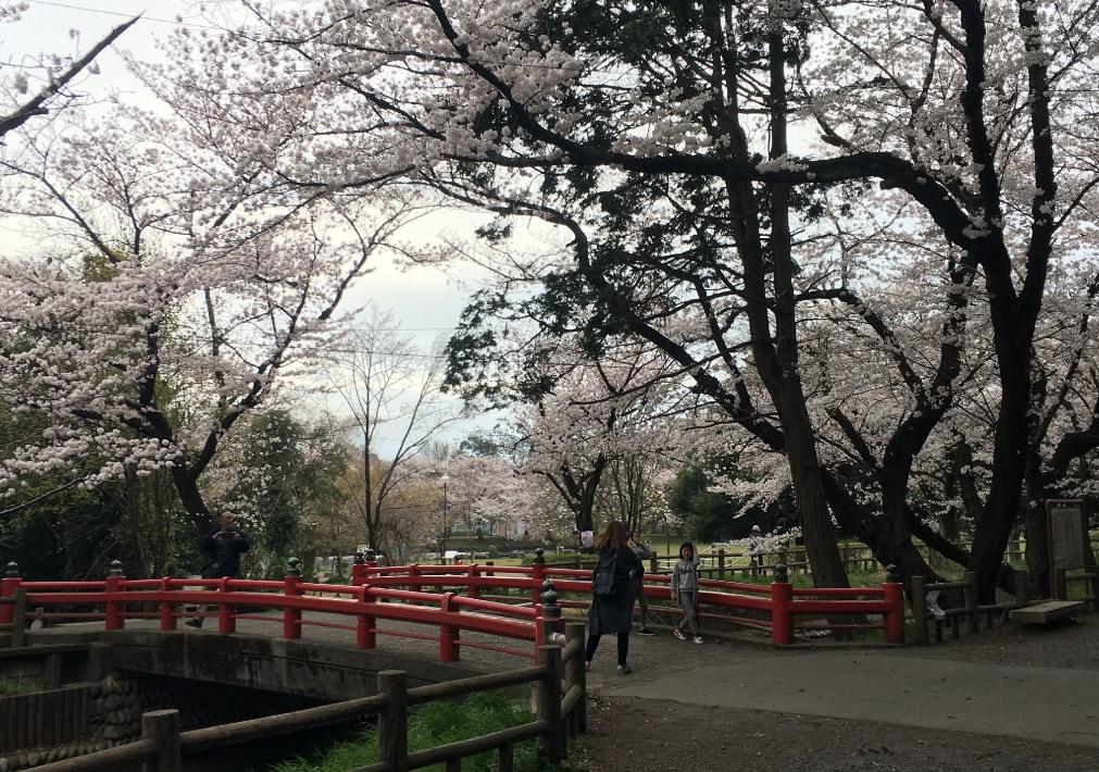 さいたま市の背中(110)『さいたま市の個人的想い出の桜三選』